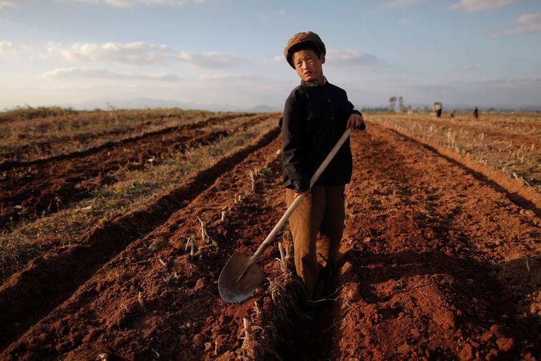 Een collectieve boerderij in de provincie South Hwanghae die in 2011 werd getroffen door overstromingen.  Beeld null