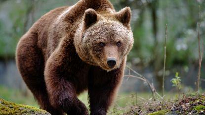 Man treft vrouw en baby dood aan na aanval door grizzlybeer