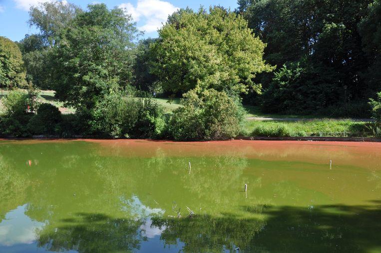 In de vijver in het Abdijpark werden blauwalgen vastgesteld.