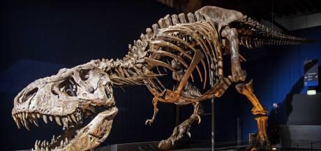 Fossielen steeds duurder door populariteit; wetenschap staat buitenspel