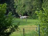 Paard overleeft botsing met trein in Twello, treinverkeer hervat