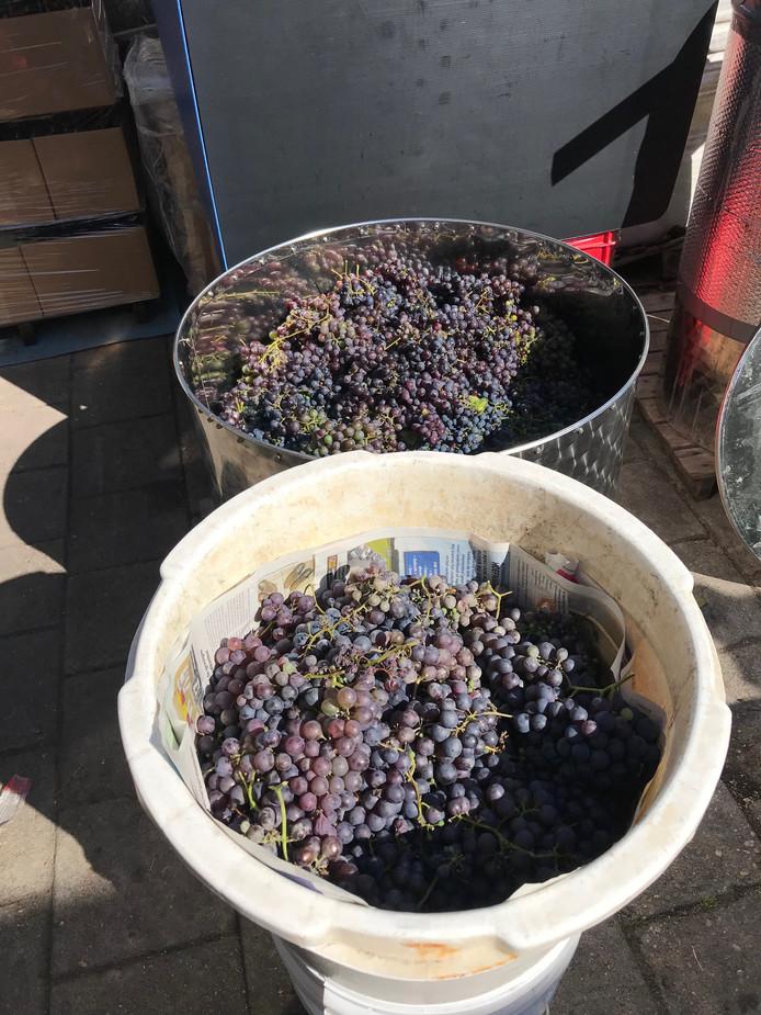 De druiven staan klaar om te verwerken.