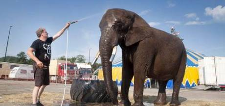 Minister: Olifant Buba mag blijven bij circusfamilie