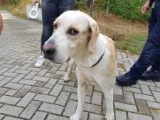 Loslopende hond gered van A28 bij Soesterberg