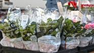 Verkoop van azalea's voor Kom op tegen Kanker gaat online