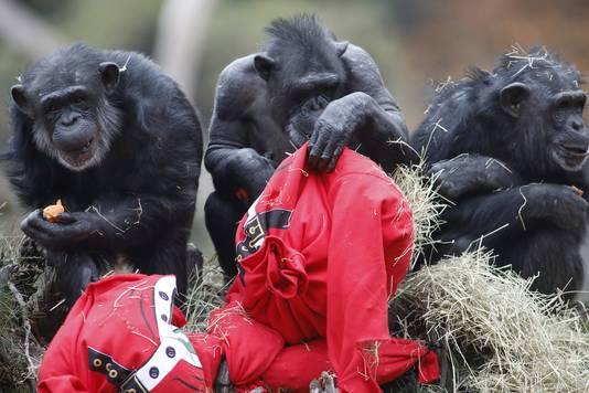 Foute Kersttrui Zelf Maken.Chimps En Beren Maken Korte Metten Met Lekkere Foute Kersttruien In