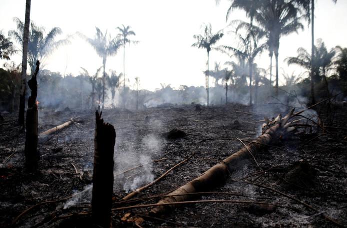 Des pans entiers de la jungle sont brûlés dans l'État d'Amazonas, l'un des plus touchés par les feux et la déforestation