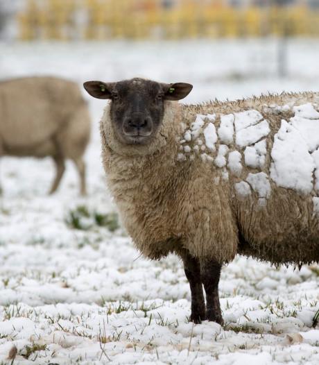 Oppassen! Vanavond sneeuwbuien in Zeeland