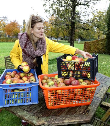 Tilburgse Rosemarijn geeft 'weesfruit' een liefdevolle bestemming: 'Het gaat om verschrikkelijk veel kilo's'