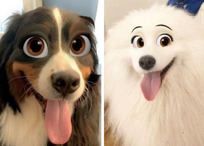 Snapchat a un nouveau filtre que les amoureux des chiens vont adorer.