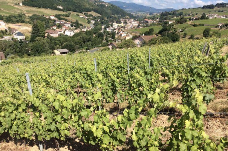 De wijngaard van de vier vrienden.