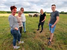 Westelbeerse blonde koeien voor Middelbeerse slagerij