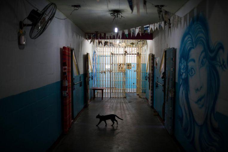 Een kat loopt door de gang van een Braziliaanse gevangenis. Beeld ap