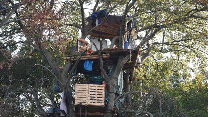 Laatste activistenboomhut ontmanteld in omstreden Duits bos