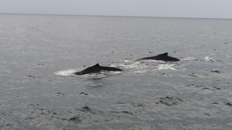 Arne heeft voor het eerst last gehad van heimwee, maar de walvissen maakten het al snel weer goed.