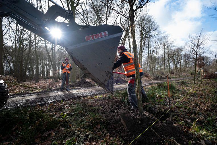 HINGENE Aanplanting van de nieuwe bomen in kasteeldomein d'Ursel