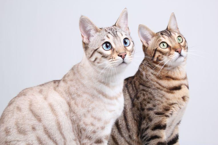 Katten. Beeld null