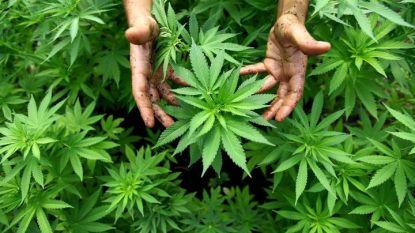 VS-justitieminister Sessions komt met algemeen verbod op cannabis