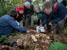 Paddenstoelen in Eindhovens bos willen wel maar kunnen niet, door de droogte