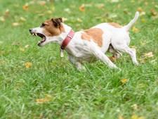 Dieren die overlast veroorzaken op de korrel in Berkelland