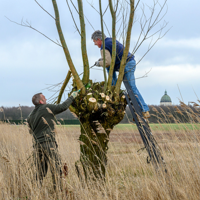 Wilgen knotten in Gastels Laag | Roosendaal | bndestem.nl