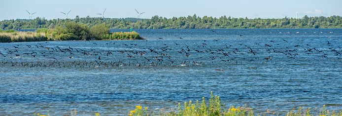 Het Volkerak-Zoommeer.