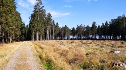 Henriette (86) wil kortere weg naar huis nemen, maar raakt 24 uur verdwaald in bossen van Hoge Venen