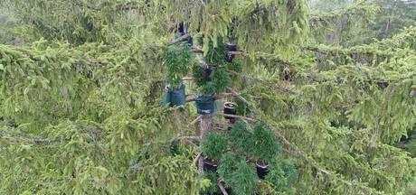 Politie stuit op creatieve wietplantage:  potten gevuld met cannabis in boom