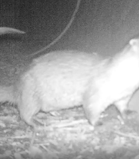 Beschuit met muisjes in de Ooijpolder: voor het eerst in 50 jaar een ottertje geboren