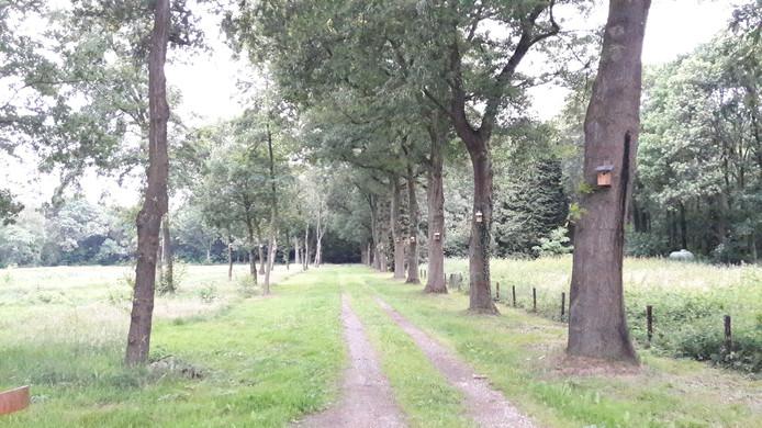 Aan de overkant van de Karrevenseweg in Heijen wordt een nieuw fietspad gelegd dat fietsers door het bos naar het tunneltje onder de A77 brengt.