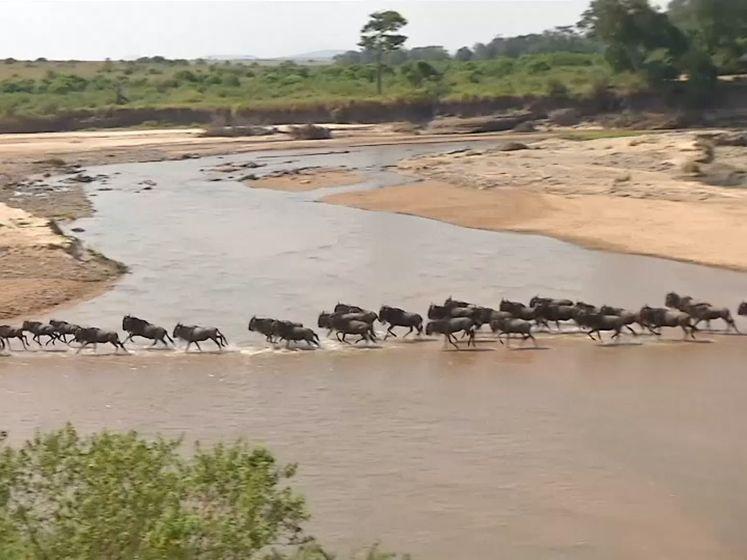 Wegblijven van toeristen bij gnoe-trek zorgt voor crisis in Kenia