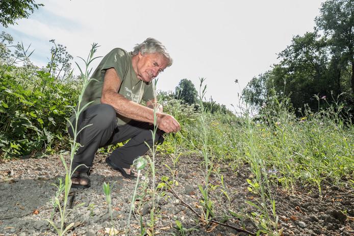 Ep Booneman van de Vrienden van de Natuurtuin in de bijzondere tuin in het Westerpark.