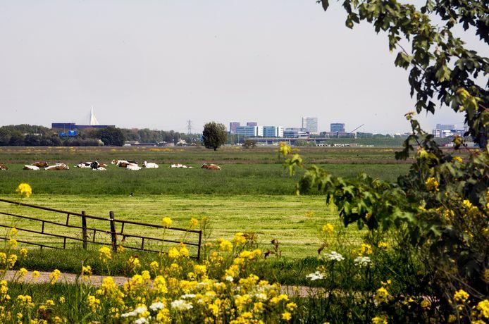 Polder Rijnenburg