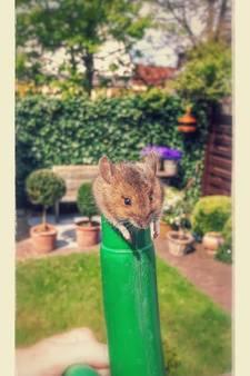Bizar einde voor muis in Beek
