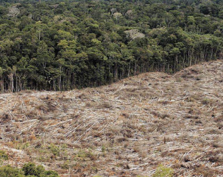 Ontbossing in het Braziliaanse Amazone-gebied.  Beeld EPA