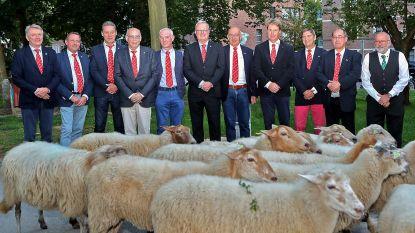 Grote Markt decor voor... schapenkoers