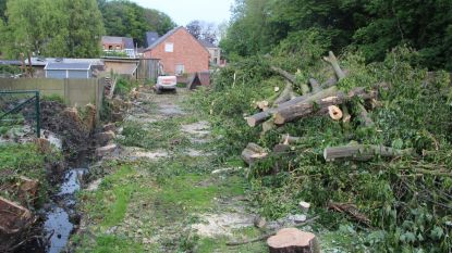 20-tal bomen illegaal gekapt in opdracht van Farys en gemeentebestuur
