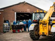 LIVE | Weer twee nertsenbedrijven besmet, heropening Britse scholen 'nationale prioriteit'