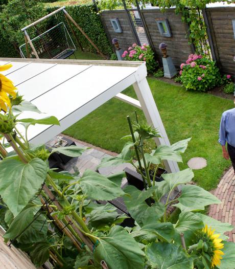 Sylvie uit Herveld verslaat opa met zonnebloem van bijna 4 meter