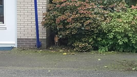 De kat gesnapt in Schothorst