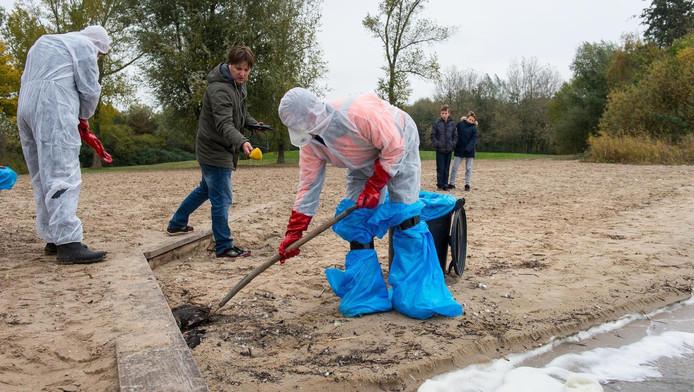 Dode kuifeenden worden geruimd op een strandje bij Monnickendam