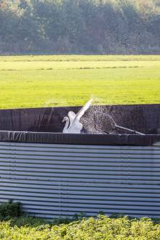 Duikers vangen voor derde maal zwanen in waterbassin van kweker