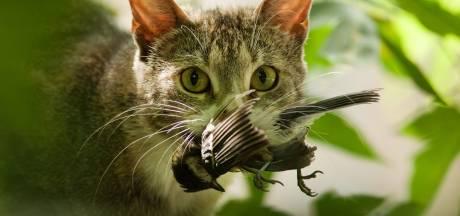 Minister, houd de kat niet langer aan het lijntje