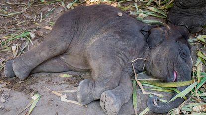 Respect: Afrikaanse olifant slaapt maar 2 uur per dag