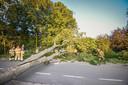 Brandweer zaagt gespleten boom omver in Luttelgeest