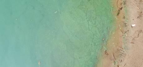 Experts verwachten 'explosie' van blauwalg door het warme weer
