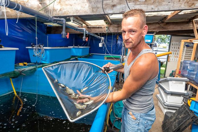 Ed van Egmond is een van de weinigen in Nederland die het ambacht van het kweken van jonge vis, beheerst.