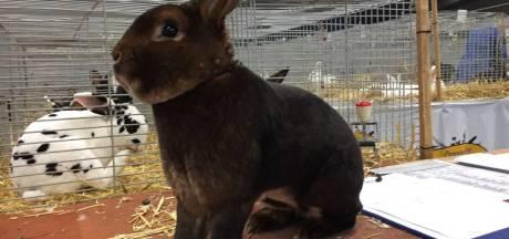 Bijna 4.000 dieren op eén na grootste show van Nederland in Druten