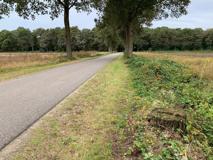 Langs de Prins Hendriklaan werden zonder vergunning circa 16 eiken van een cultuurhistorische bomenrij gekapt.