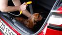 Het hondenbadje achterin de Ford Puma